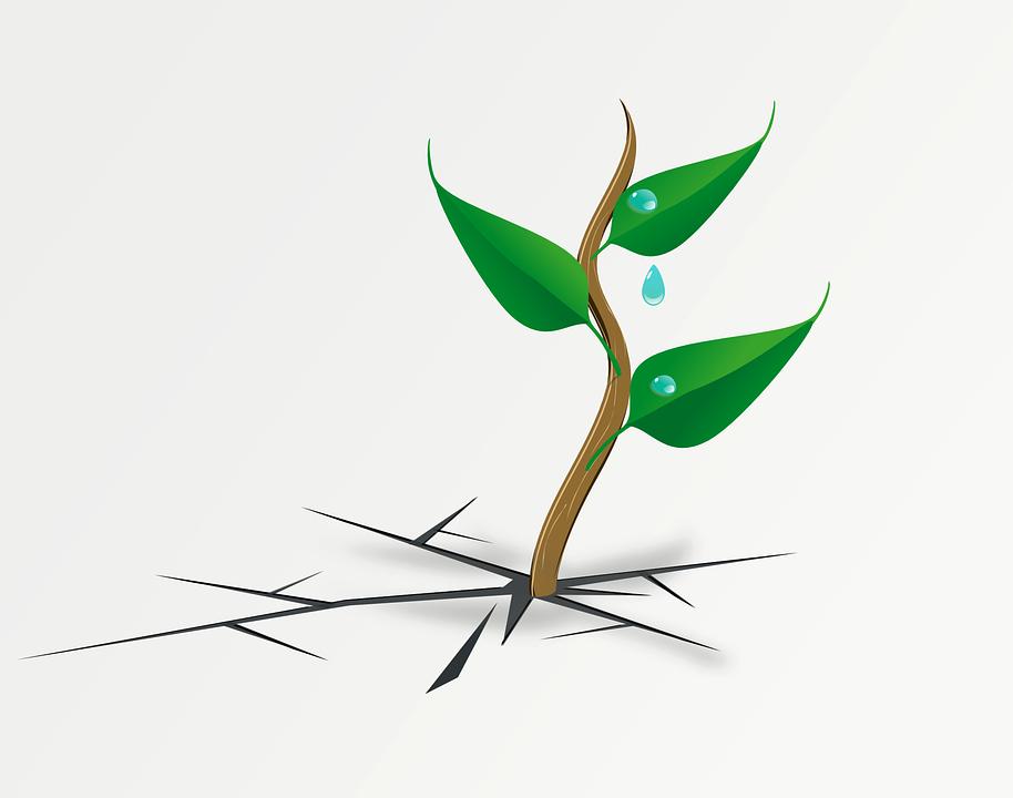 wachsende Pflanze bricht durch Boden