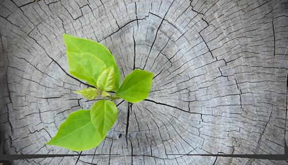 Change-Management im Unternehmen
